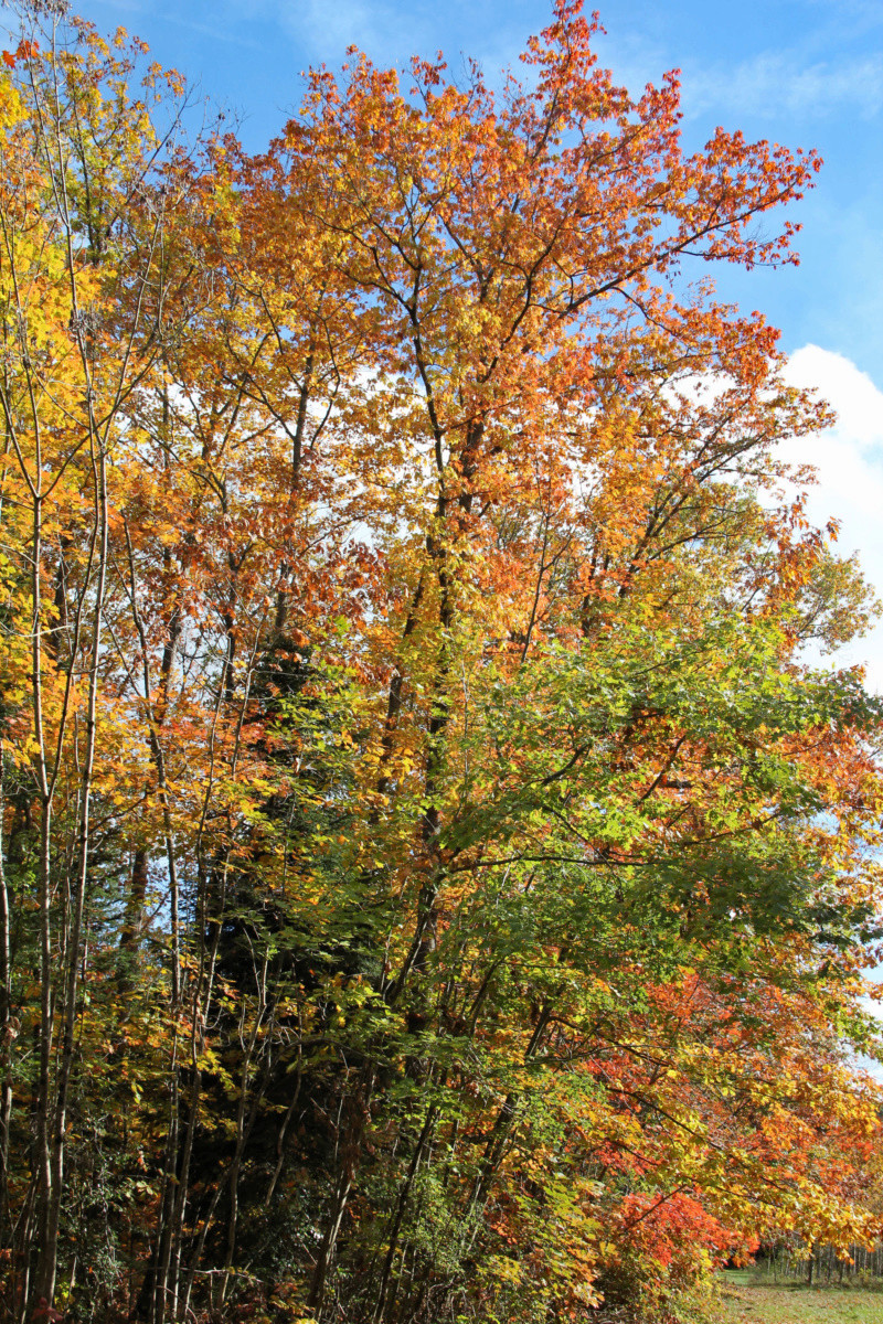 Tons d'automne Img_1850