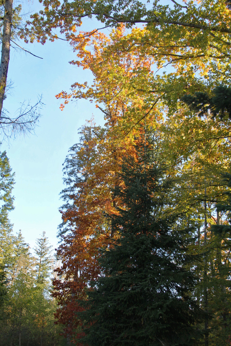 Tons d'automne Img_1851