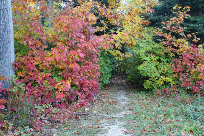 Tons d'automne Img_1852