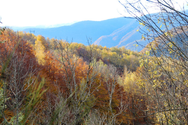 Tons d'automne Img_1854