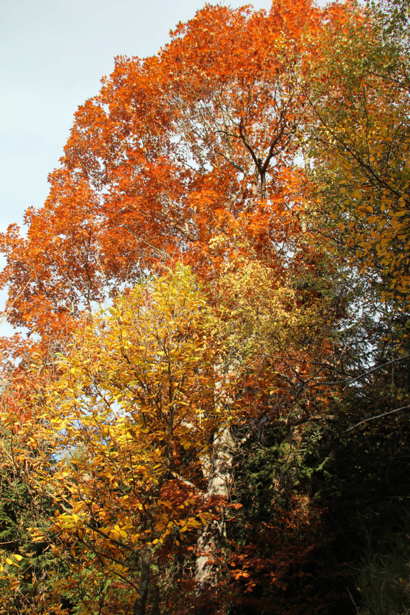 Tons d'automne Img_1855