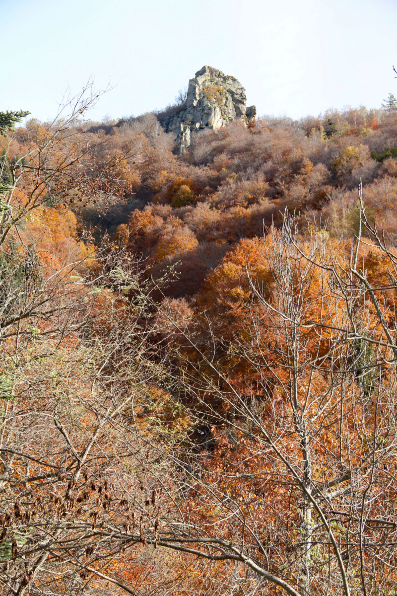 Tons d'automne Img_1856