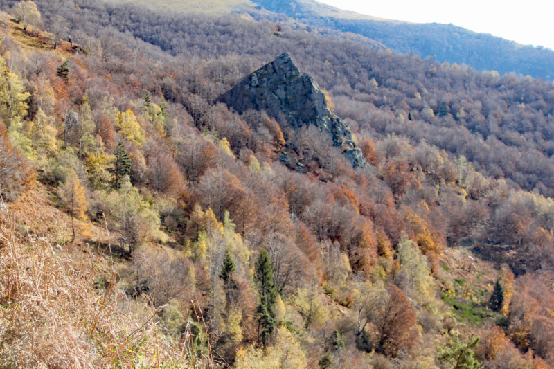 Tons d'automne Img_1858