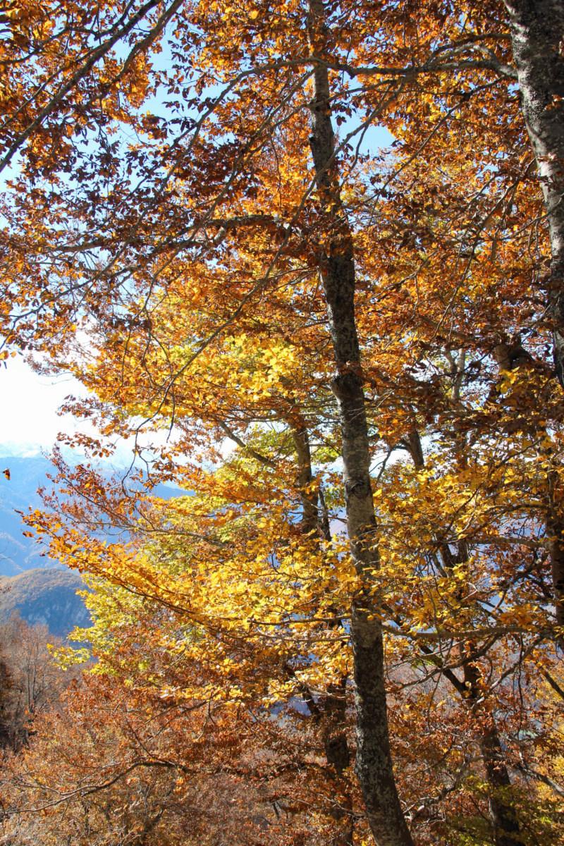 Tons d'automne Img_1859