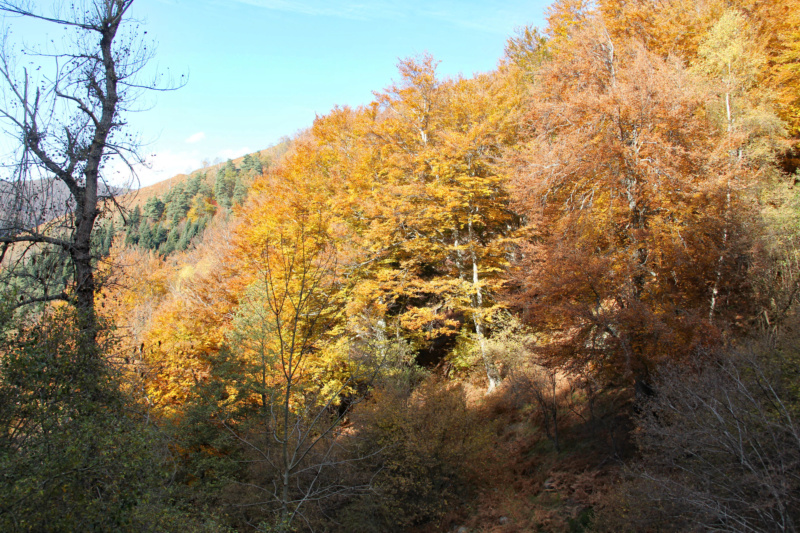 Tons d'automne Img_1860