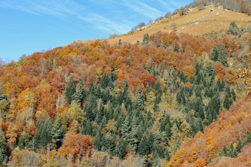 Tons d'automne Img_1861