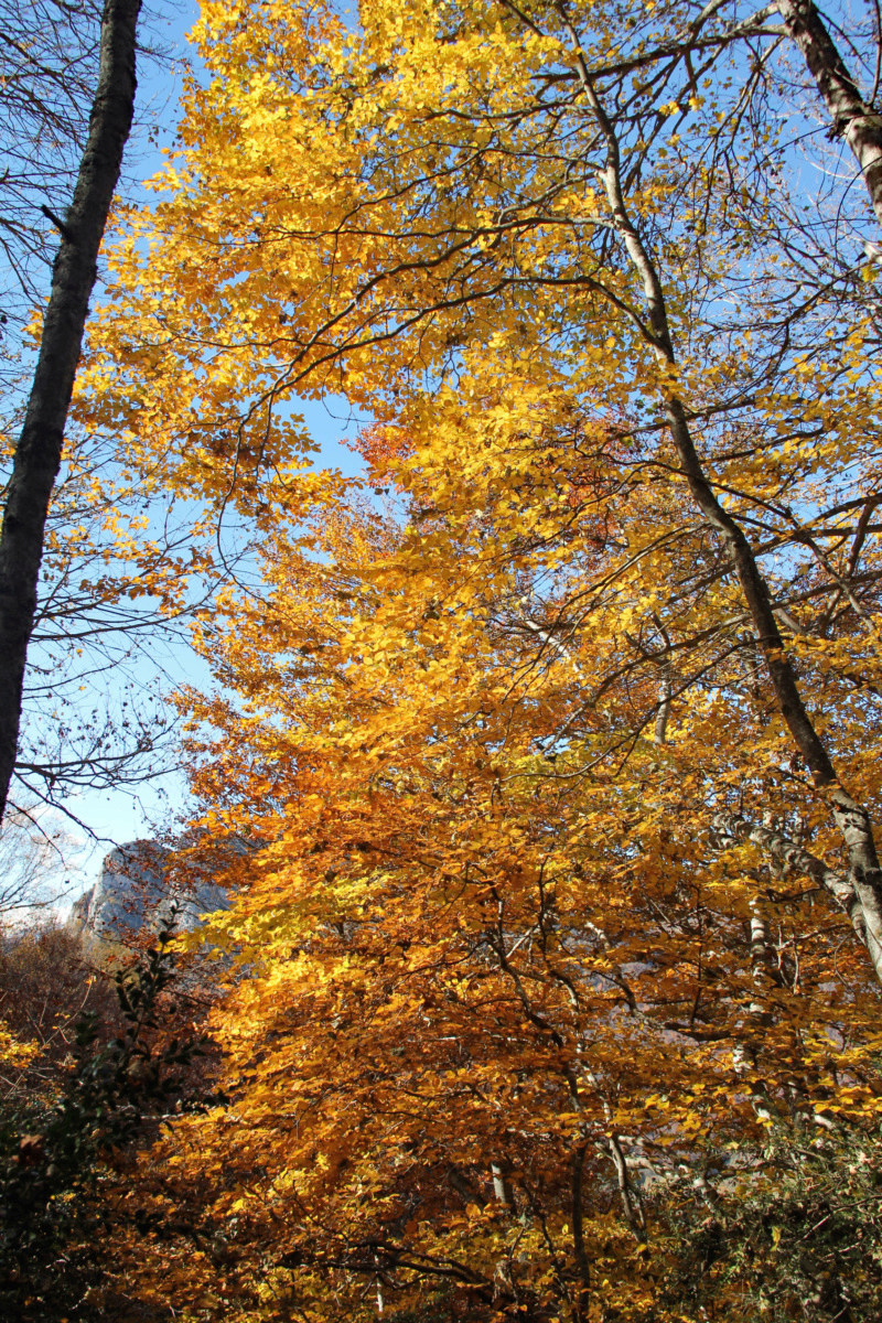 Tons d'automne Img_1862