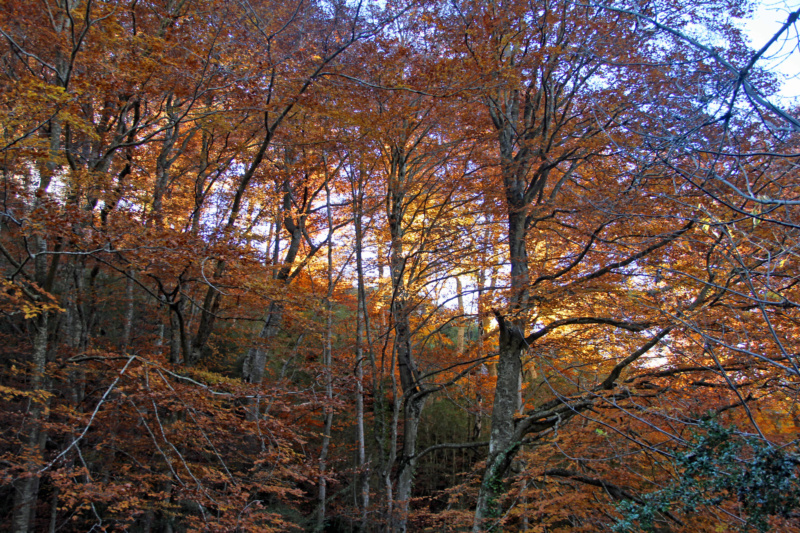 Tons d'automne Img_1864