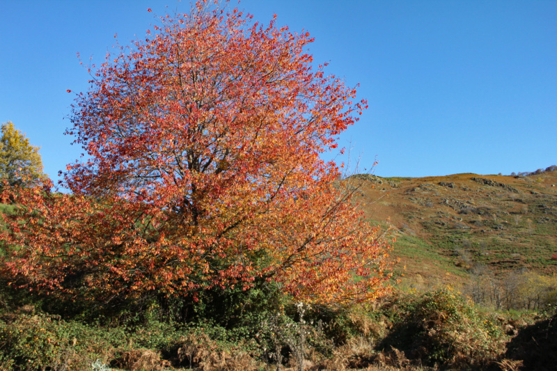 Tons d'automne Img_1910