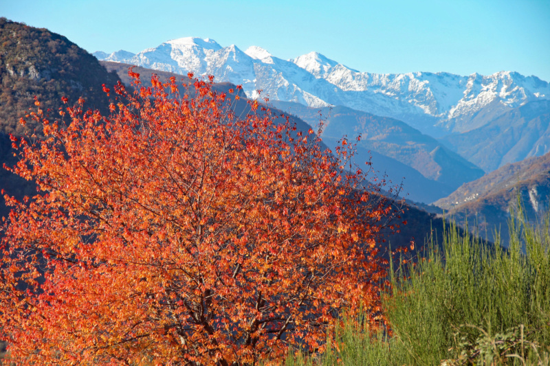 Tons d'automne Img_1911