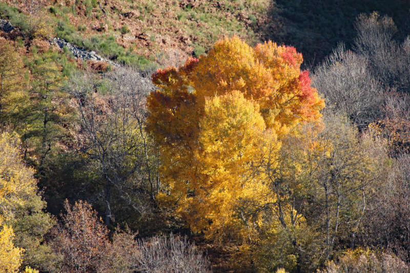 Tons d'automne Img_1912