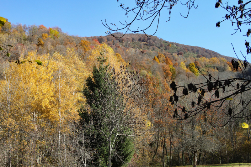 Tons d'automne Img_1915