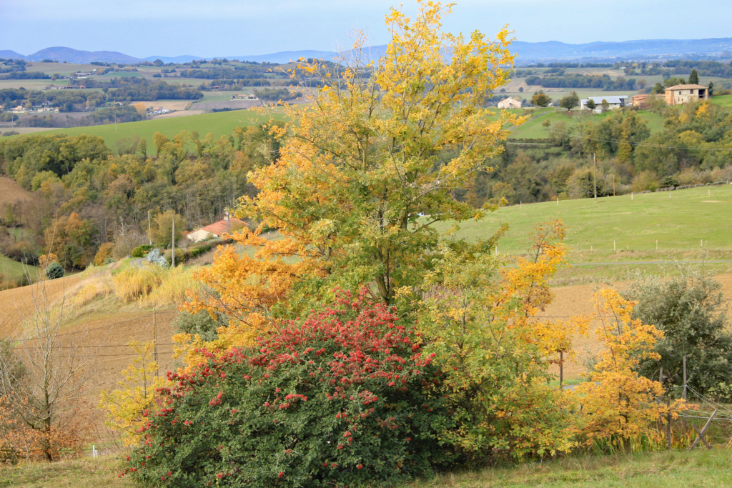 Tons d'automne Img_3549