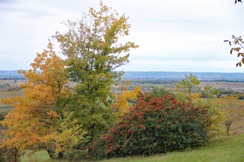 Tons d'automne Img_3550