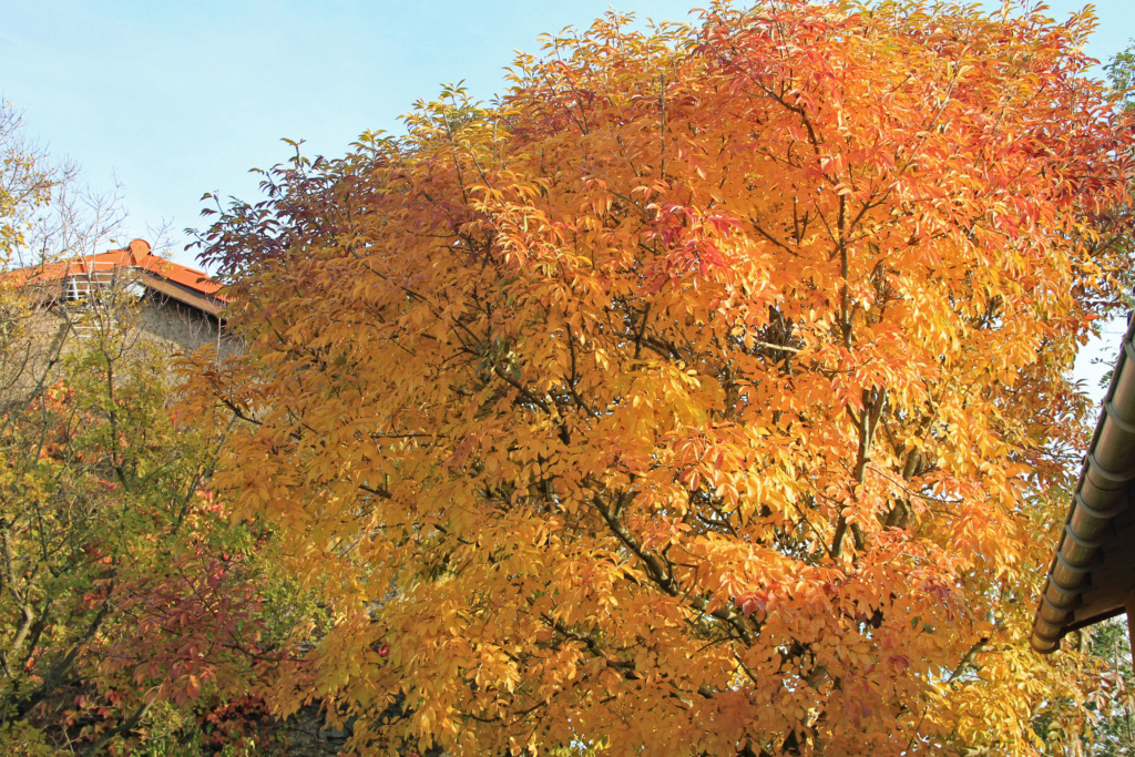Tons d'automne Img_3551