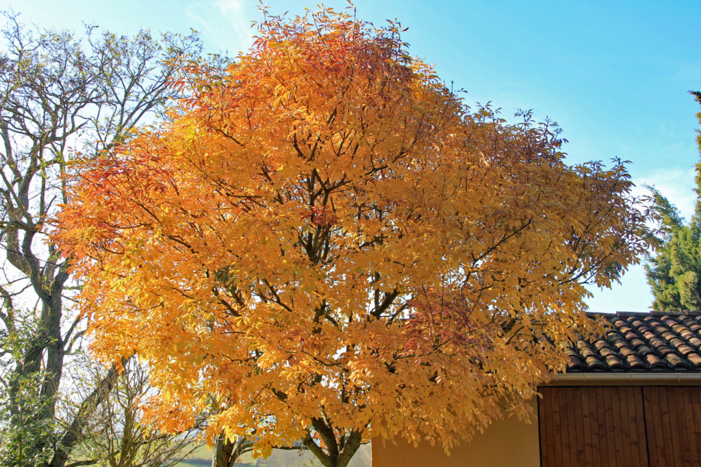 Tons d'automne Img_3552