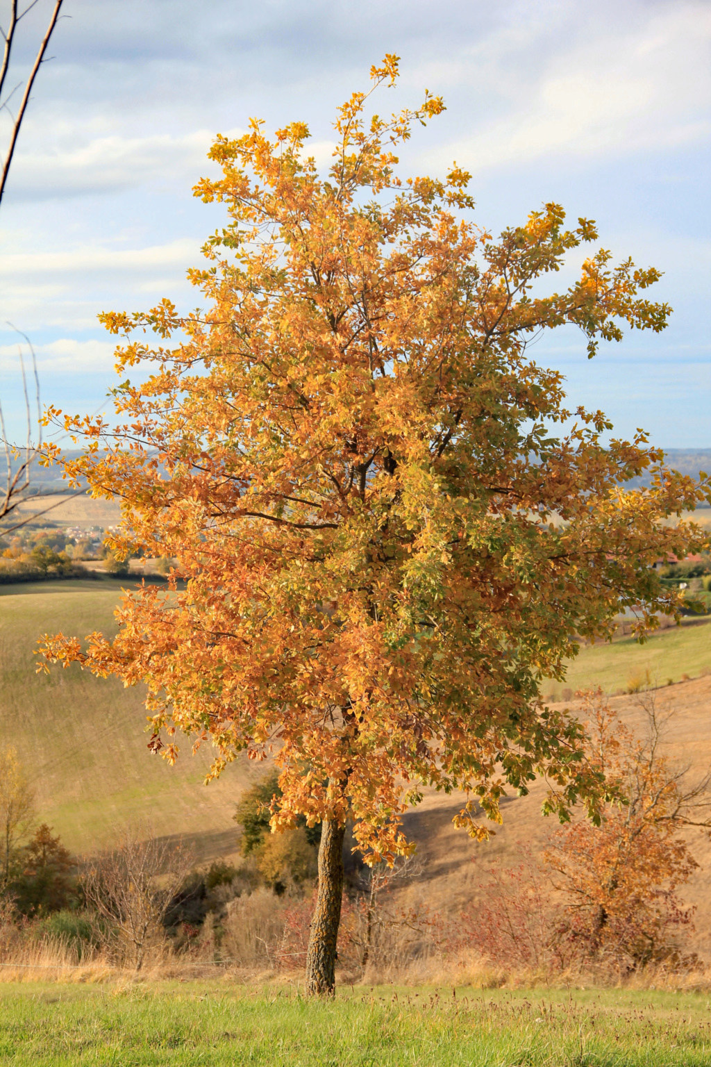 Tons d'automne Img_3553