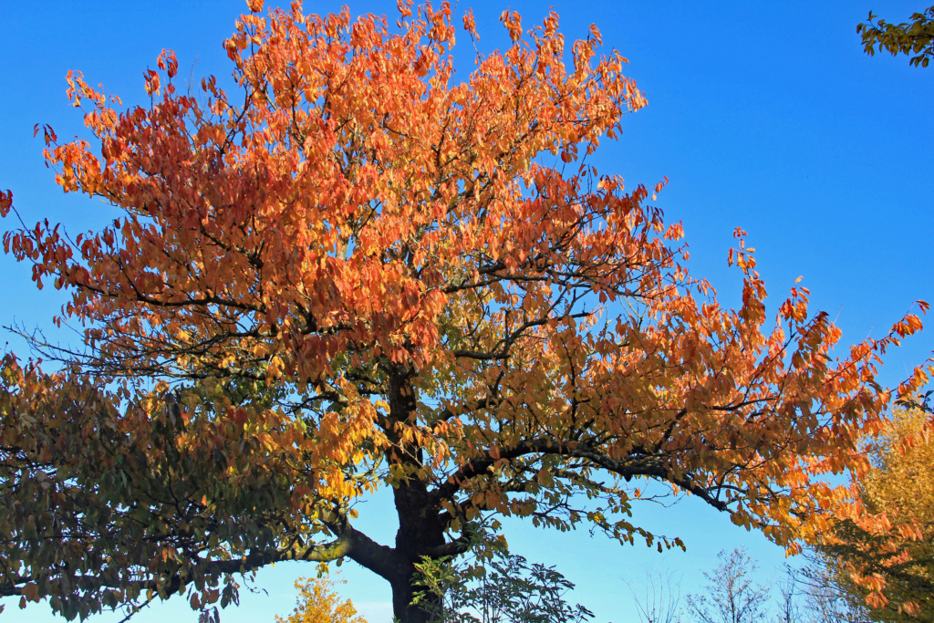 Tons d'automne Img_3554