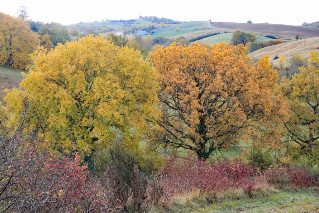 Tons d'automne Img_3555