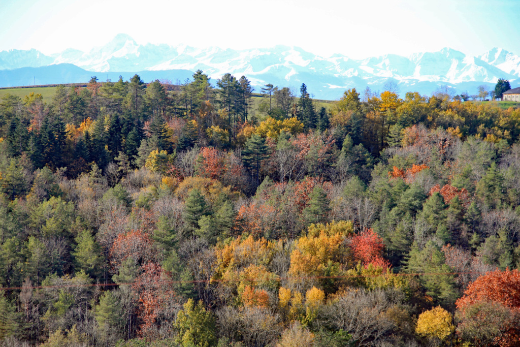 Tons d'automne Img_3558