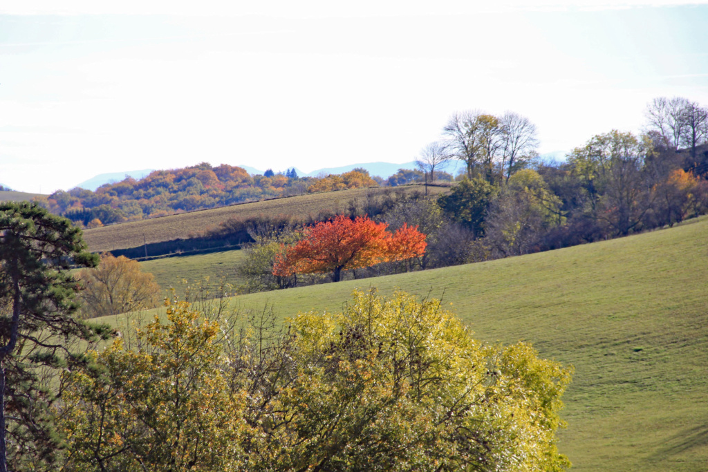 Tons d'automne Img_3559