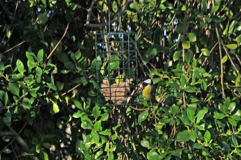 Les oiseaux du jardin - Page 2 Img_3617