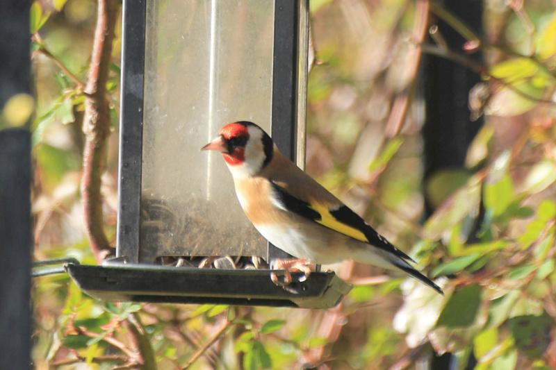 Les oiseaux du jardin - Page 2 Img_3618