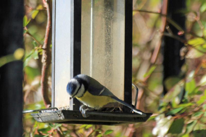 Les oiseaux du jardin - Page 2 Img_3619