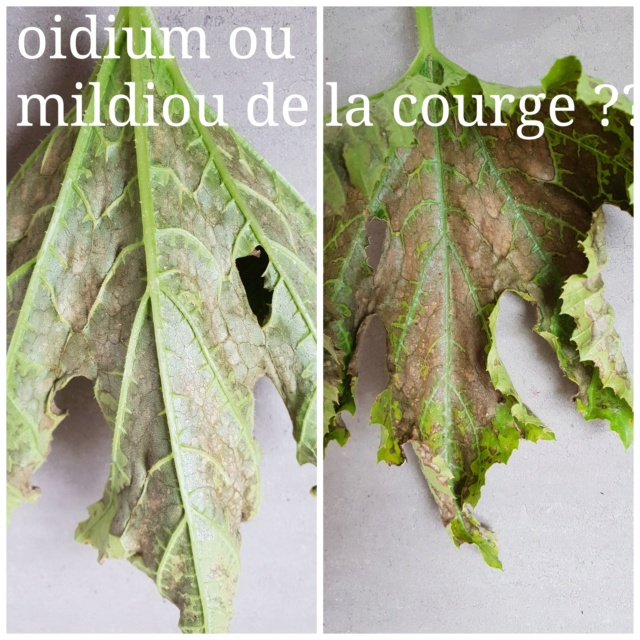"Potager ""au naturel"" Pixlr_10"