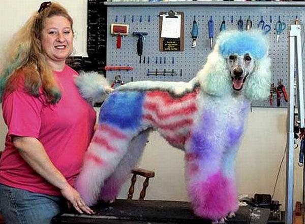 Крашеные собаки и стрижки 111a2910