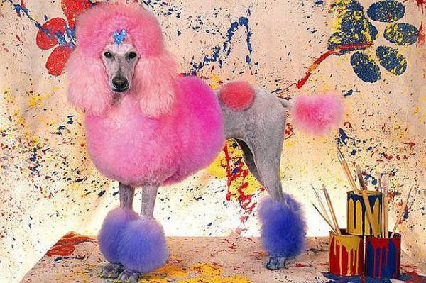 Крашеные собаки и стрижки 48af0510