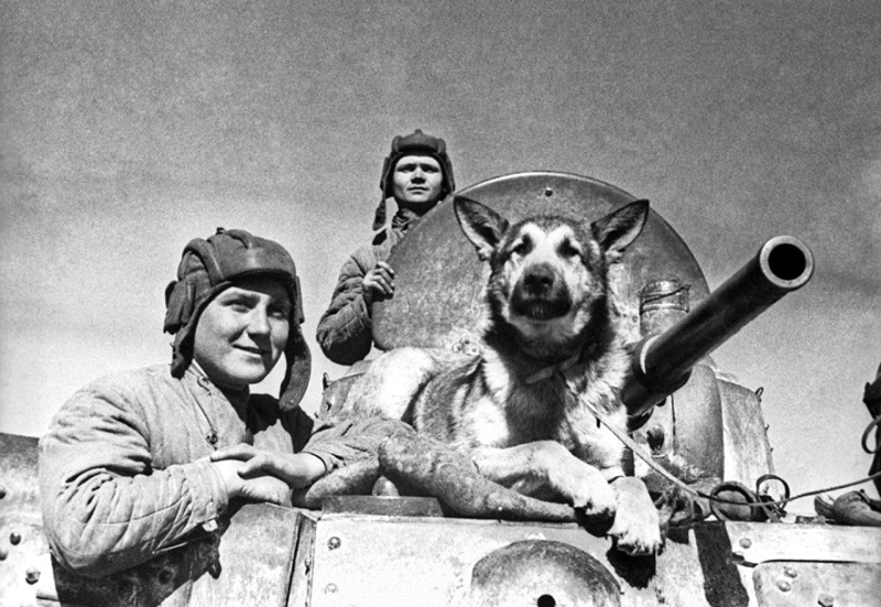 Julbars,le celebre chien de detection de mines 1-2410