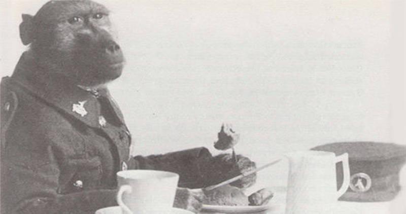 Jackie; Le soldat sud-africain babouin de la première guerre Capora10