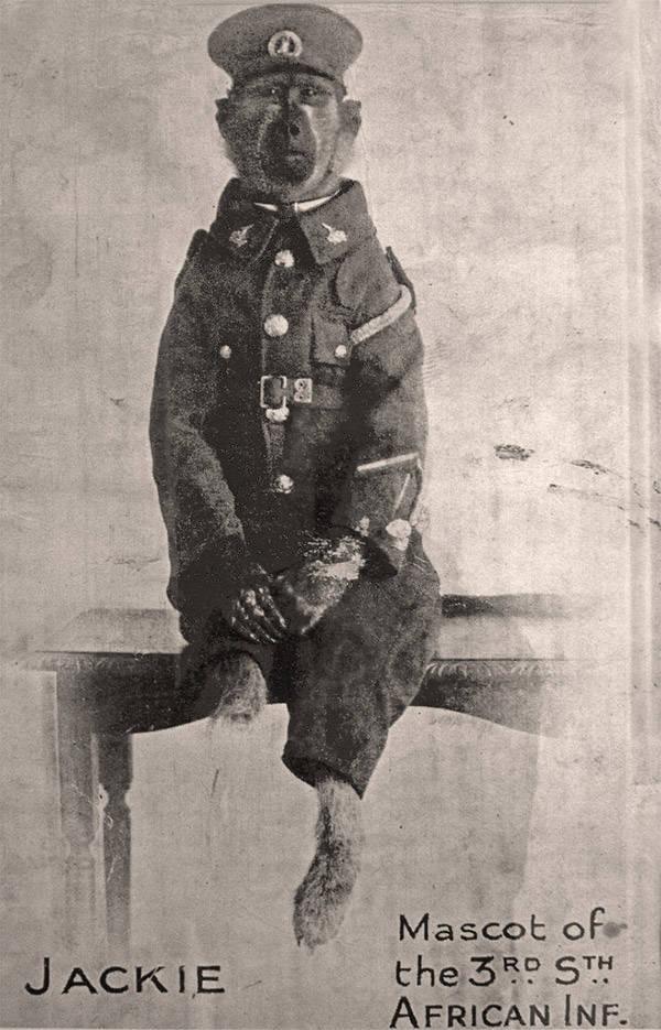 Jackie; Le soldat sud-africain babouin de la première guerre Corpor10