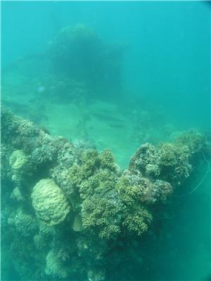 Micronesie,l atoll de Truk - Page 3 Susuki11