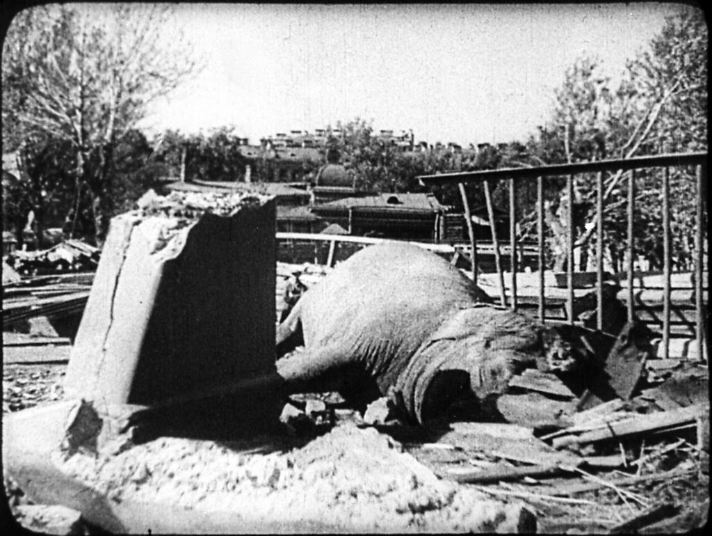 Bataille de Léningrad - Page 2 Zzz106