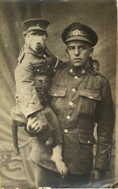 Jackie; Le soldat sud-africain babouin de la première guerre Zzzz56