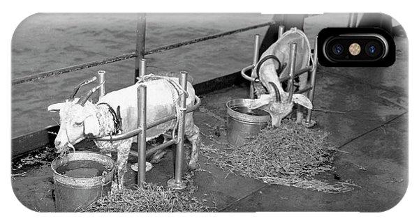 Les cochons marins! Zzzzz405