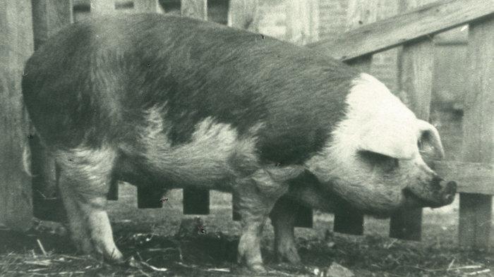 Les cochons marins! Zzzzz415