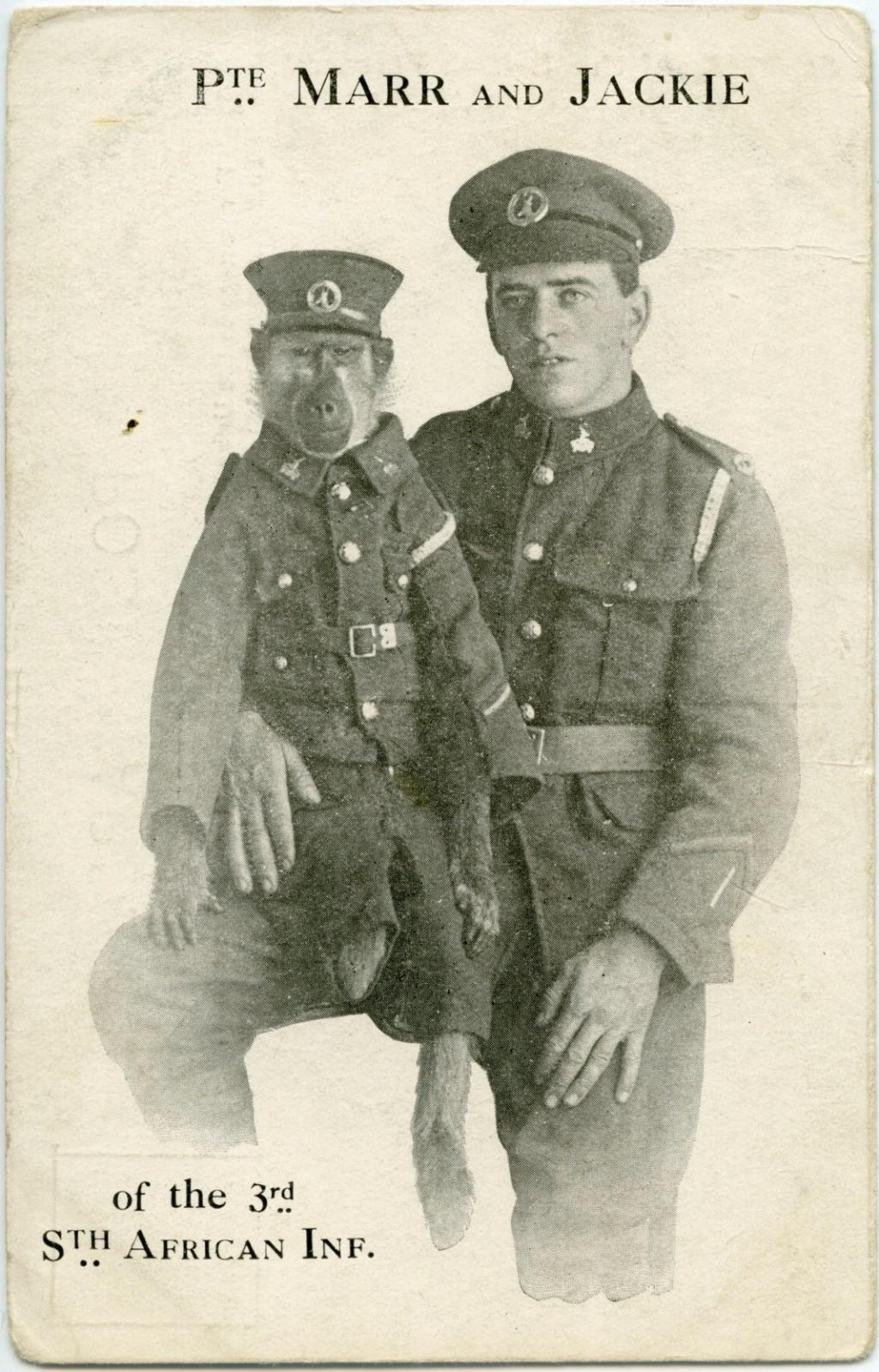 Jackie; Le soldat sud-africain babouin de la première guerre Zzzzz461
