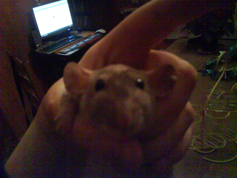 4 portés de bb rats a reservé dans le (59) Dsc01131