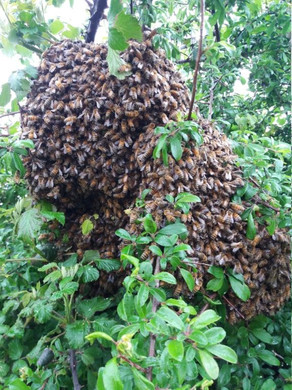 abeilles et produits phytos  - Page 3 20190510