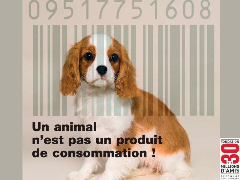 contre la maltraitance envers les animaux Pas-un11
