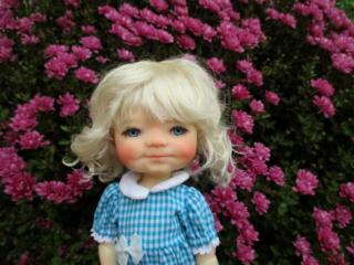 Famille MY MEADOW de Annie : ma merveilleuse Saffi sunkissed Img_4813