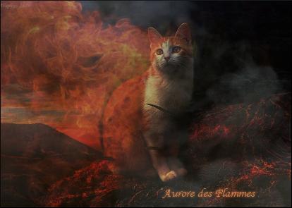 ♛Unknown Cat Battleground♛ - Page 12 Aurore10