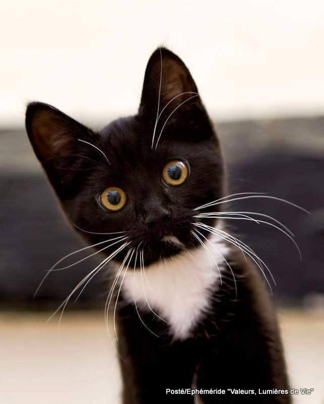 Pour les amoureux des chats 12509711