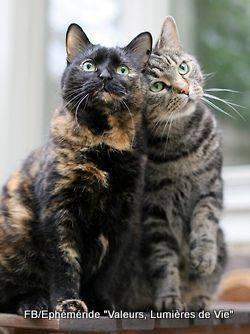 Pour les amoureux des chats 12742510