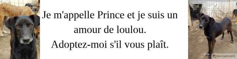 SUIVI DES PARRAINAGES DE LINO - MERCI A TOUTES SES MARRAINES - Page 6 Prince12