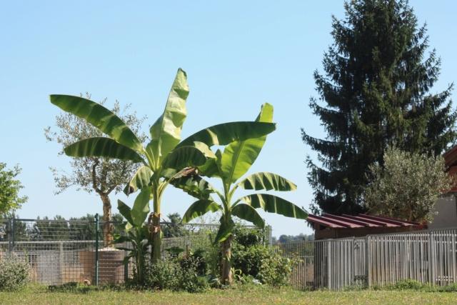 Mon Jardin limite Gers Landes 2019 Img_2110