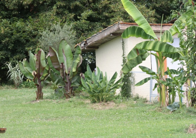 Mon Jardin limite Gers Landes 2019 Img_2213